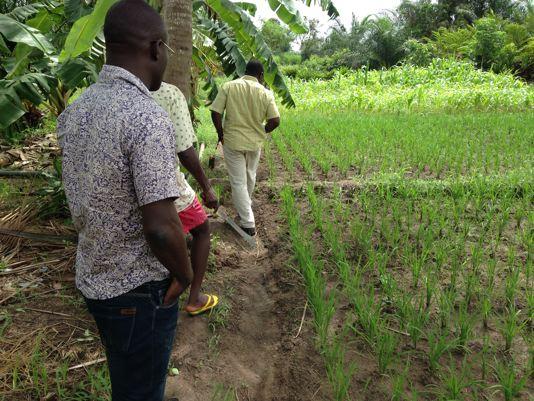 Kokou Joseph ADOKANOU's SRI trial plots in Kovié